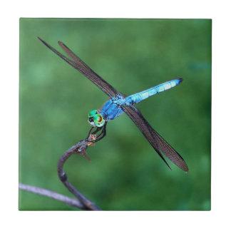 Teja azul hermosa de la foto de la libélula