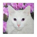 Teja blanca de la cara del gato