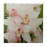 Teja blanca de las orquídeas