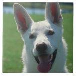 Teja blanca del perro de pastor alemán