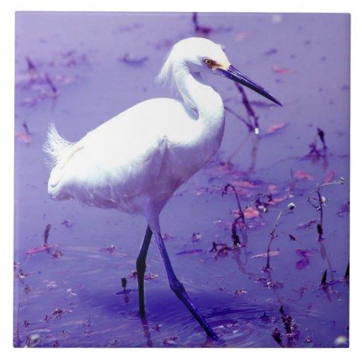 Teja blanca púrpura del pájaro del Egret