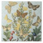Teja botánica de las mariposas del vintage…