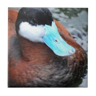 Teja cargada en cuenta azul del pato