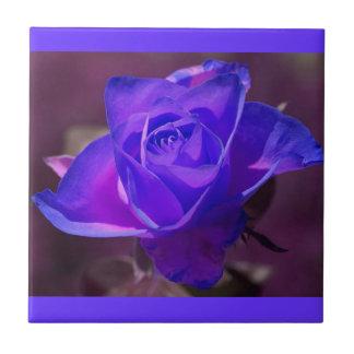 Teja color de rosa rosada púrpura Trivet de N