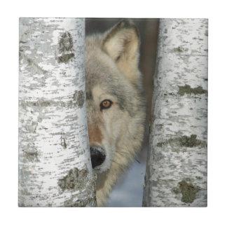 teja con la foto del lobo gris en algunos árboles