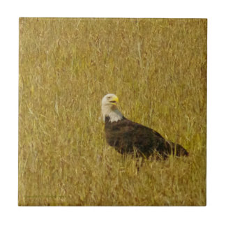 Teja de Eagle calvo