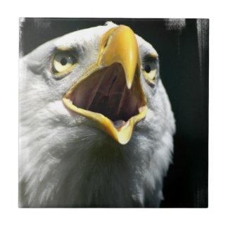Teja de Eagle Screach