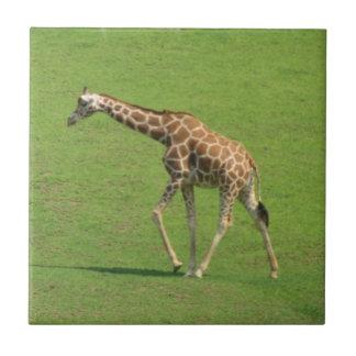 Teja de itinerancia de la jirafa