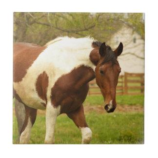 Teja de itinerancia del caballo de la pintura