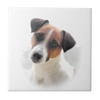 Teja de Jack Russel Terrier