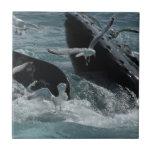 Teja de la ballena jorobada