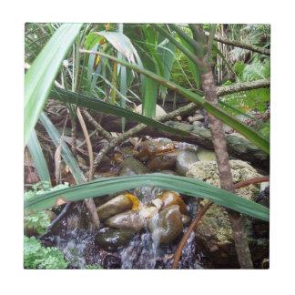 Teja de la cala de la selva tropical