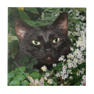 Teja de la cara del gato negro
