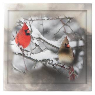 Teja de la escena del invierno de los cardenales