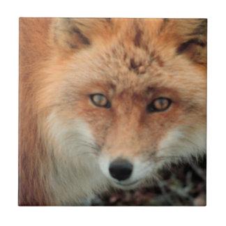 Teja de la especie del Fox