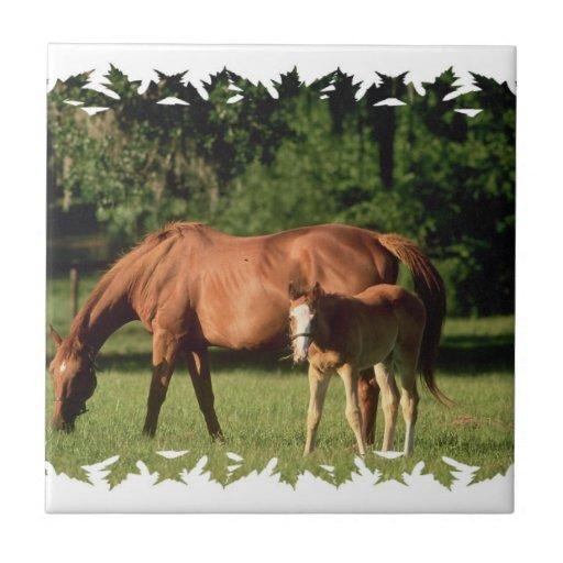 Teja de la familia del caballo