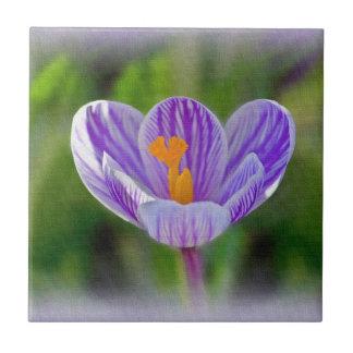 Teja de la flor del azafrán