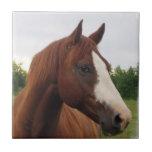 Teja de la foto del caballo de proyecto