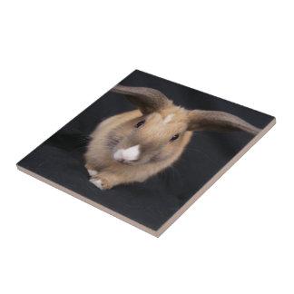 Teja de la foto del conejito del moreno
