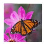 Teja de la mariposa de monarca