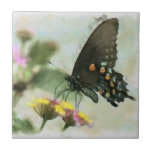 Teja de la mariposa de Swallowtail