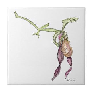 Teja de la orquídea del deslizador de señora