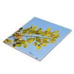Teja de la rama de las hojas