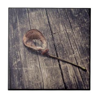 Teja de la semilla del arce