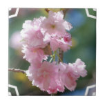 Teja de las flores de cerezo