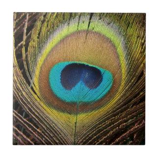 Teja de las plumas de pájaro del pavo real