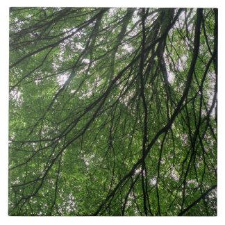 Teja de las ramas y de las hojas