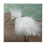 Teja de los Egrets nevados