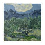 Teja de los olivos