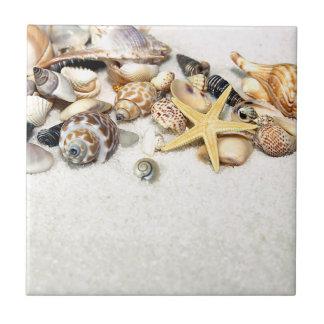 Teja de los Seashells