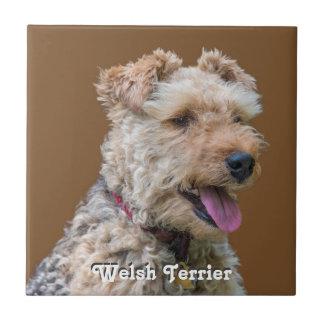 Teja de Terrier galés
