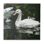 Teja decorativa de la familia hermosa del cisne