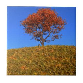 Teja decorativa del día claro del otoño