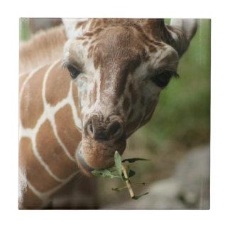 Teja del bocado de la jirafa