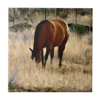 Teja del caballo