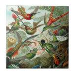Teja del colibrí