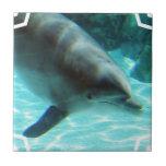 Teja del delfín común