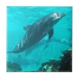 Teja del delfín de la natación