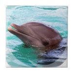 Teja del diseño del delfín