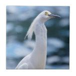Teja del Egret