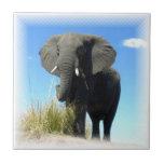Teja del elefante africano
