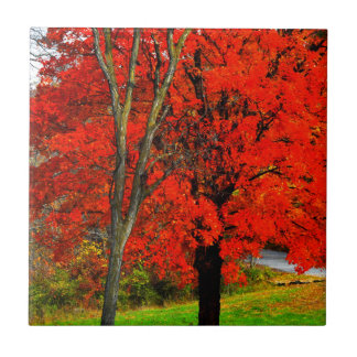 Teja del follaje de otoño
