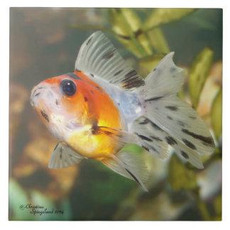 Teja del Goldfish de Ryukin del calicó del bebé