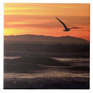 Teja del hogar de la playa de la puesta del sol