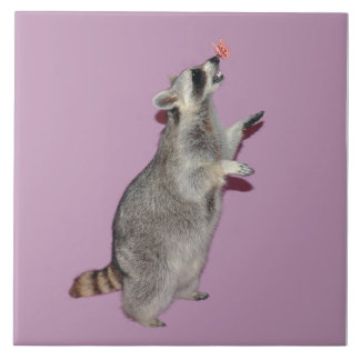 Teja del mapache