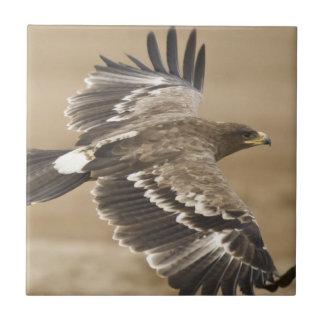 Teja del pájaro de Eagle del vuelo